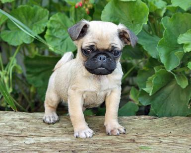 Photo Credit - http://puppies.about.com/od/OwnerPuppyCare/a/Poisonous-Plants-For-Puppies.htm