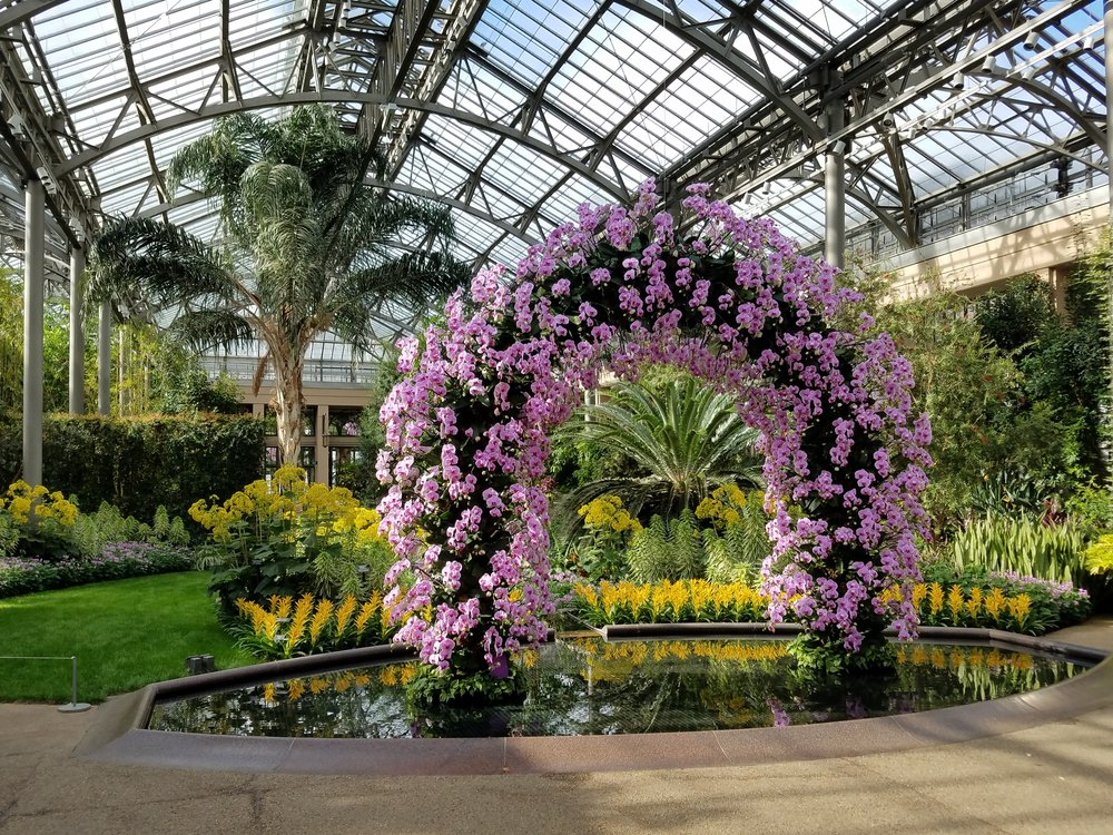 Encephalartos woodii beautifully framed by an arch of orchids during Longwood Garden's Orchid Extravaganza.  Photo Credit - Shem R.