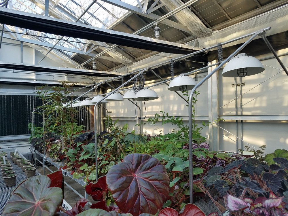 Propagation greenhouse at Longwood Gardens housing the Begonia Collection