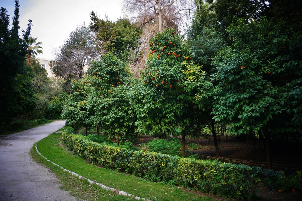 Groves of Citrus