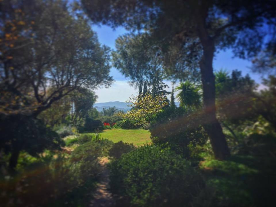 Gardening under Mediterranean skies.... clear blue with a mountainous backdrop. Perfection.