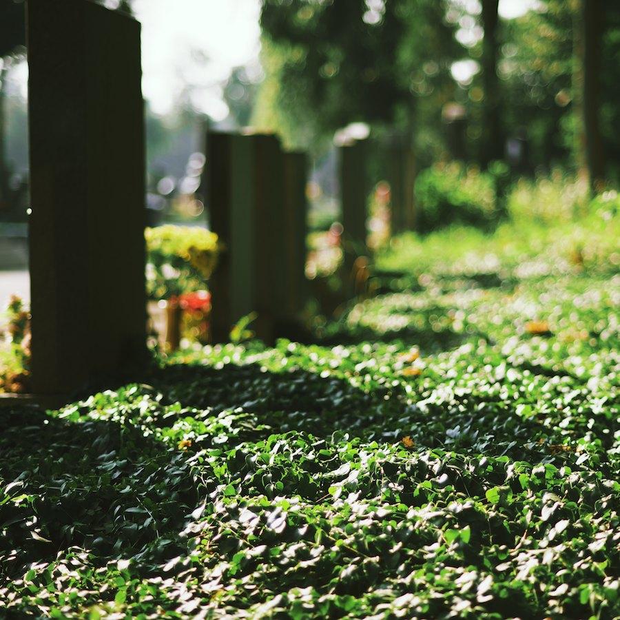 Zentralfriedhof 9