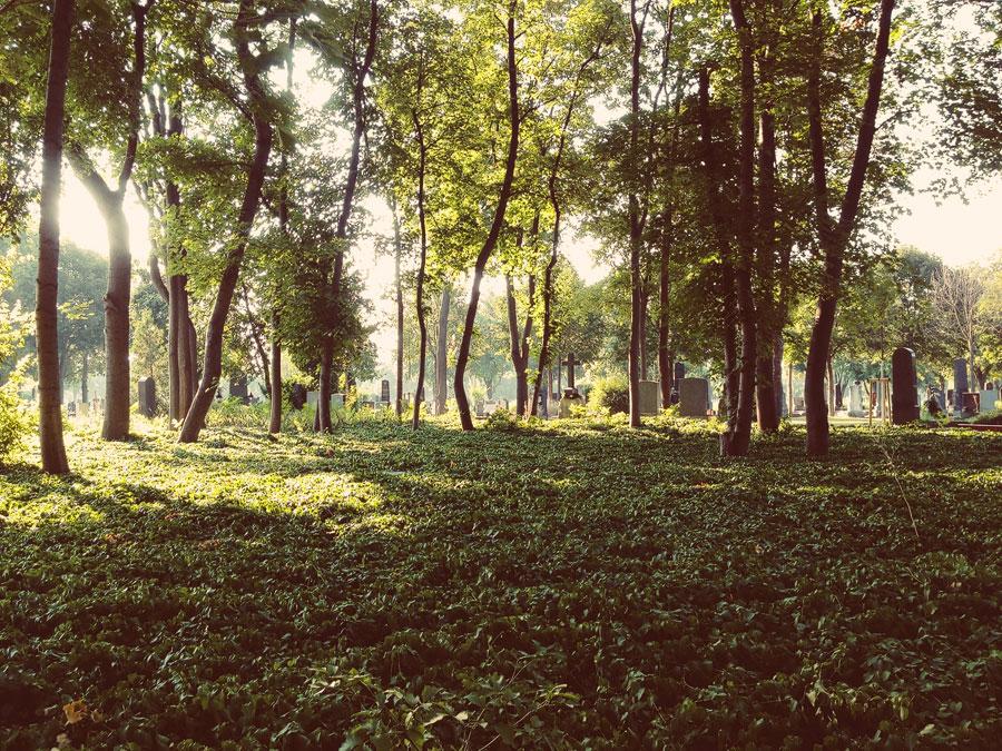 Zentralfriedhof iphone2