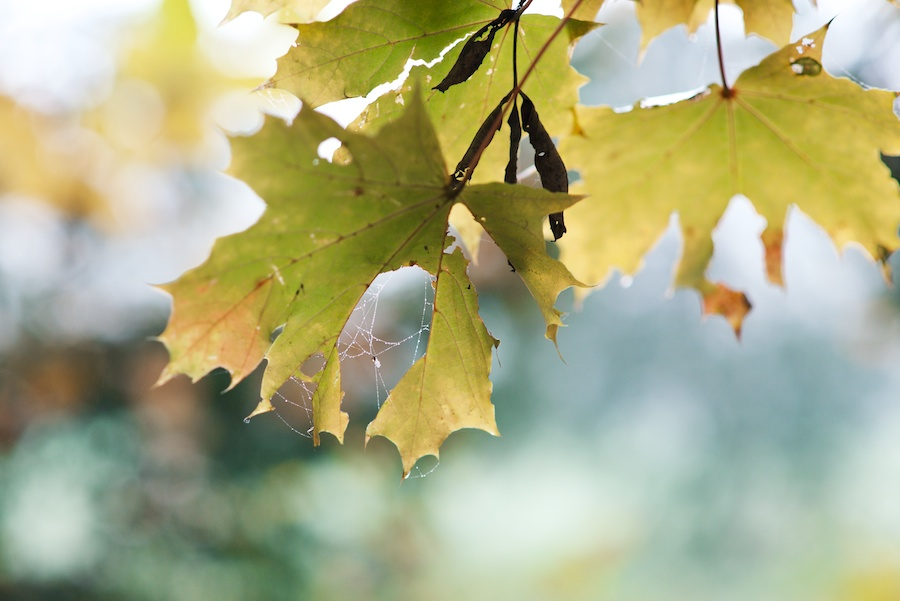 Herbstfarben 7