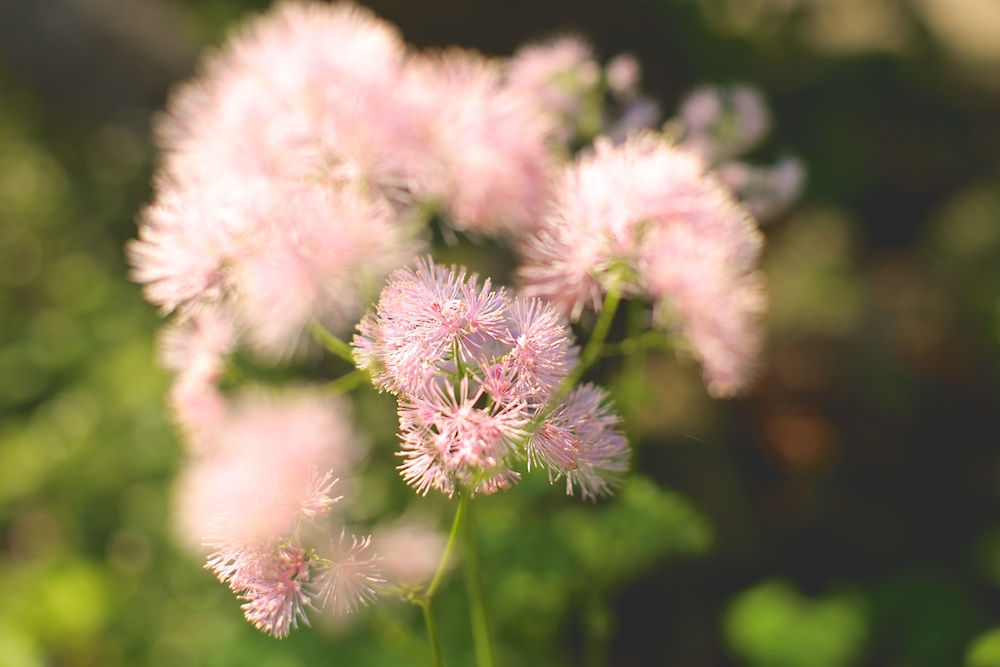 Botanik 4