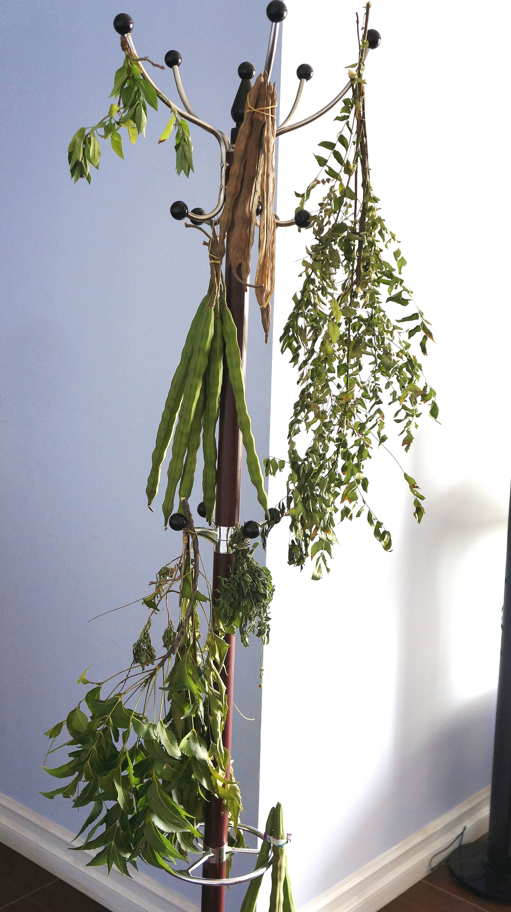 A coat hanger is perfect for drying leaves
