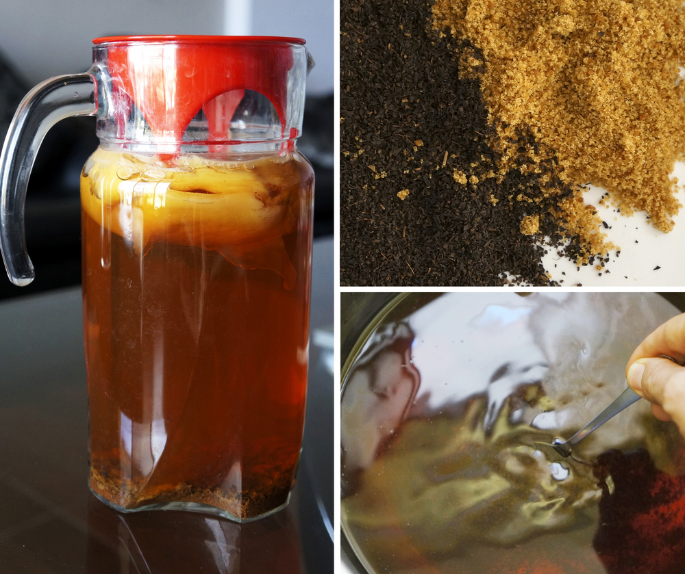 Feed for my *SCOBY - Sugar & Black Tea (Camellia Sinensis)