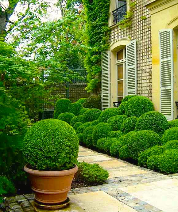 Pruning king garden designs for King garden designs