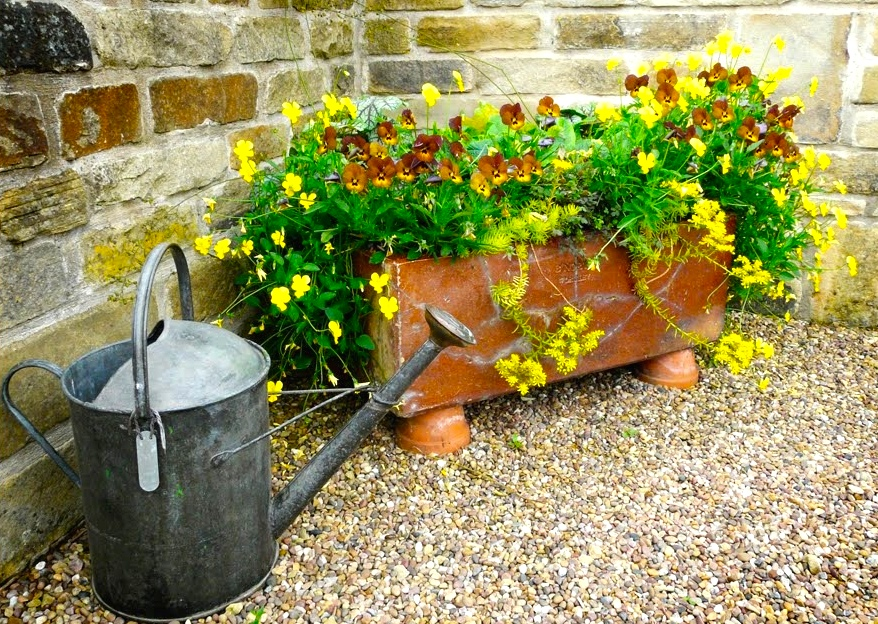 Pansies and watering can old stone wall.jpg