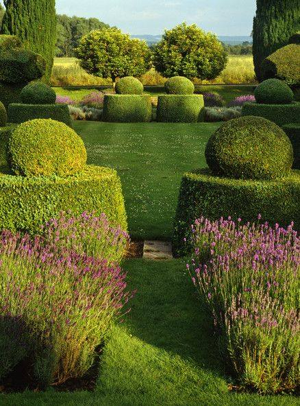 Boxwood topiary with lavender formal symetrical garden.jpg
