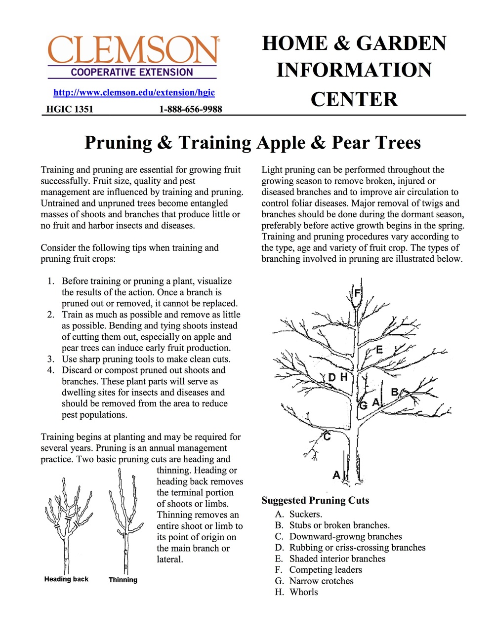 How To Prune Fruit Trees 1.jpg