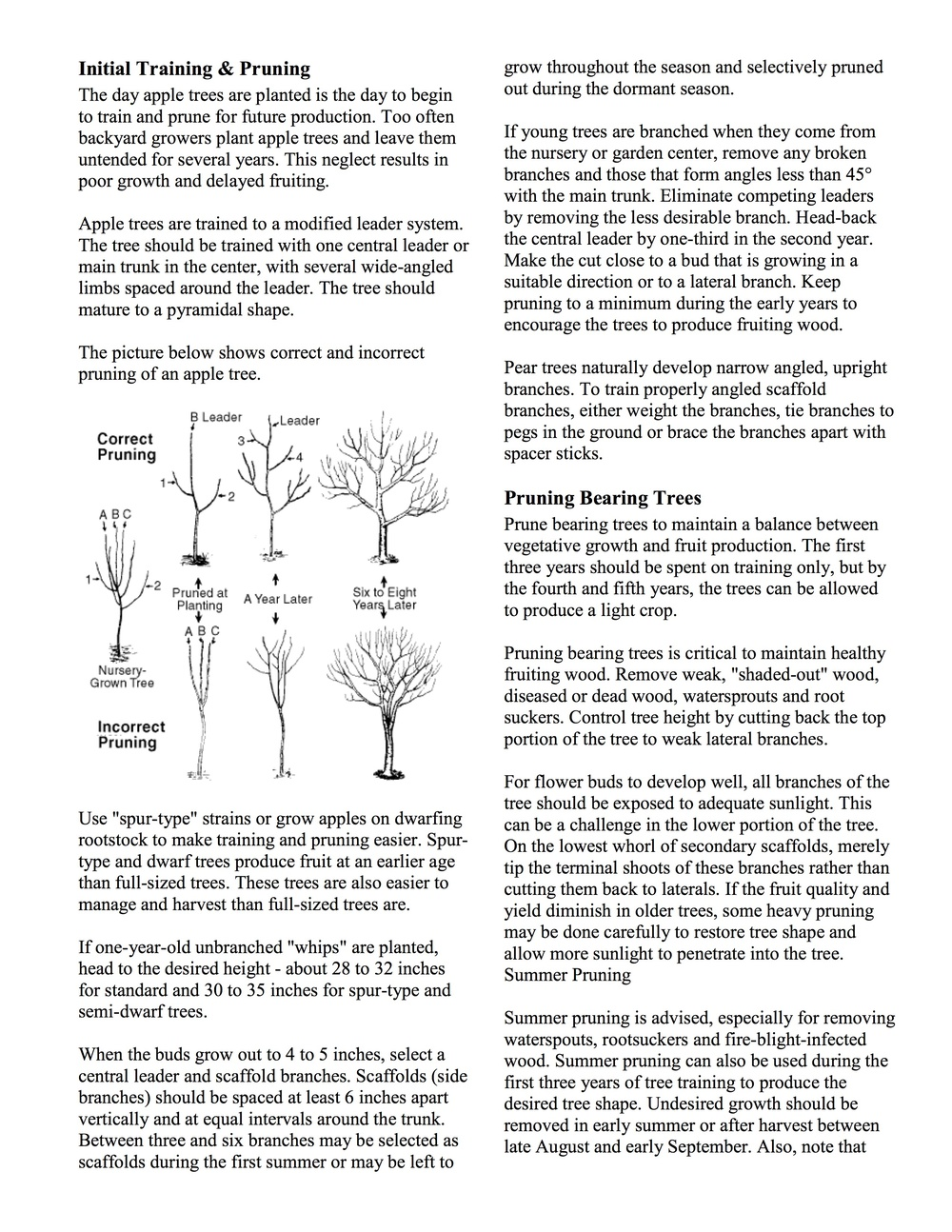 How To Prune Fruit Trees 2.jpg