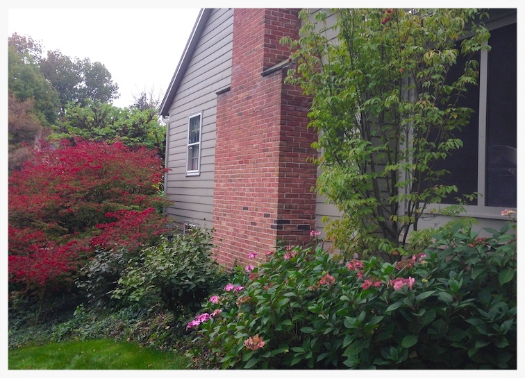 Privacy Screening Low Maintenance Planting - Pittsford, New York