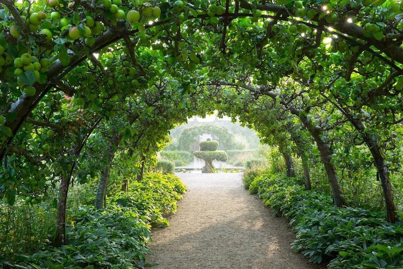 Apple tree tunnel