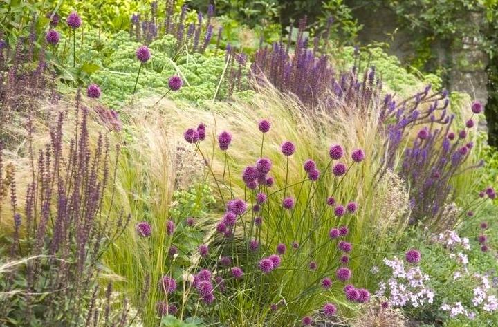 Perennial grasses garden.JPG