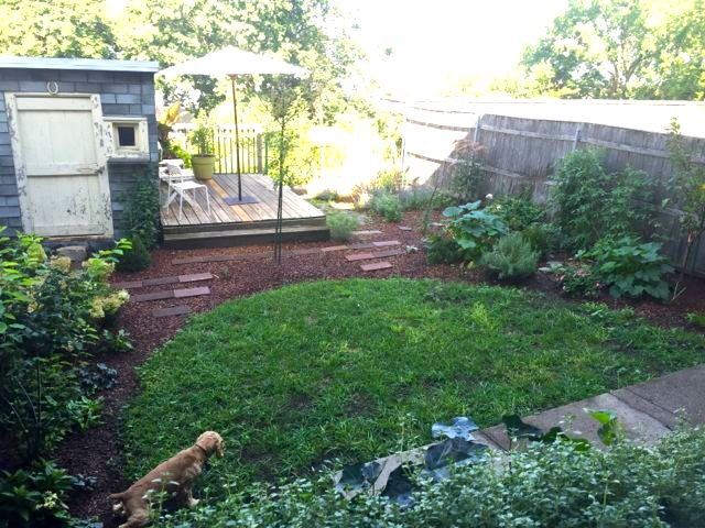 August 2016 - Newly planted shrubs, trees, perennials, grasses, vegetables and herbs - many native plants; Almelanchier, Hydrangeas, Honey Locust in center for shade, tri-grafted Apple; vines (hydrangea and trumpet) to soften shed and fences, ferns, Boxwood, Yew, dwarf Pine and Cedar for structure, winter interest and wildlife cover.
