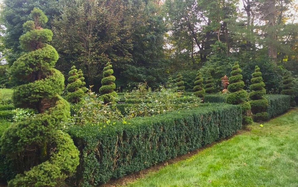 ... Topiary Spirals Dwarf Alberta Spruce 3:4 View Rose Garden  ...