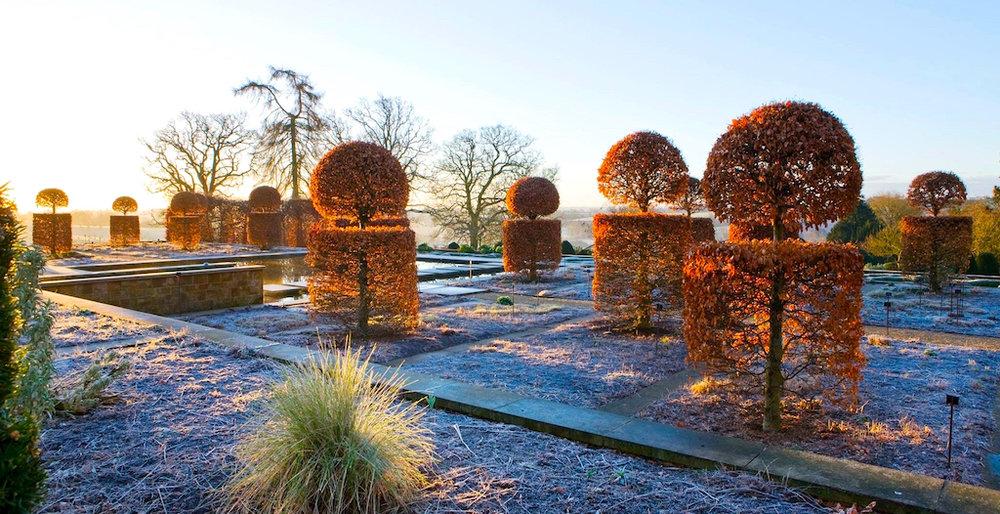 Winter Garden - Topiary Hornbeam Trees