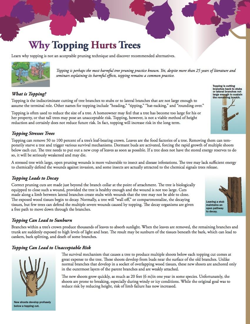 WhyToppingHurtsTrees_ISA_1.jpg