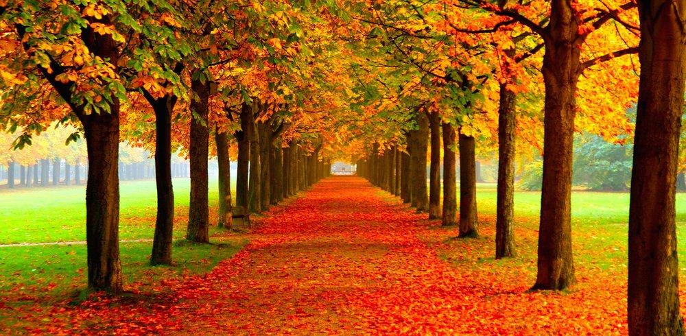Autumn Horse Chestnut Allee Detail.jpg