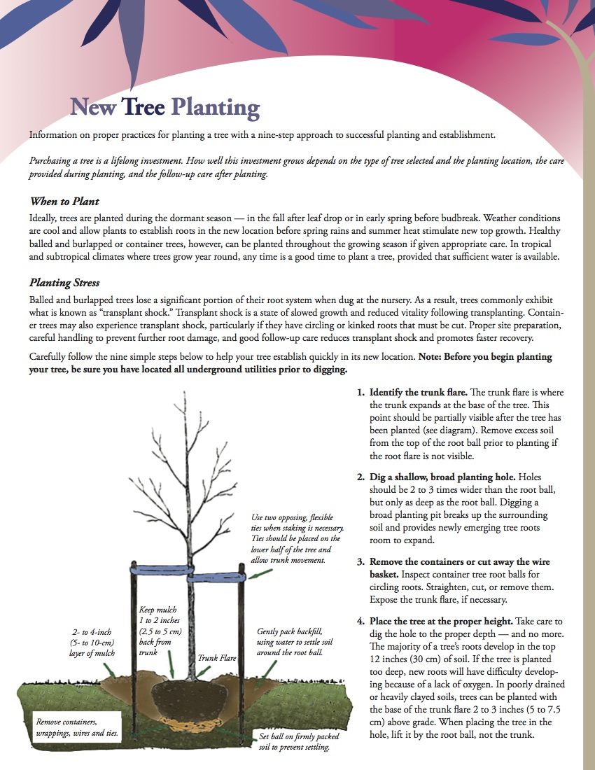 New Tree Planting Information