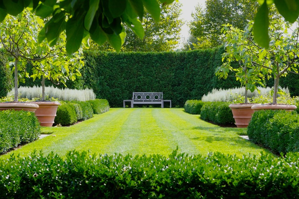 Garden hedge bench boxwood parterre figs pots.jpg