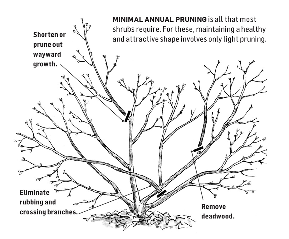 Renewal Pruning - Light Thinning and Removal Of Defects