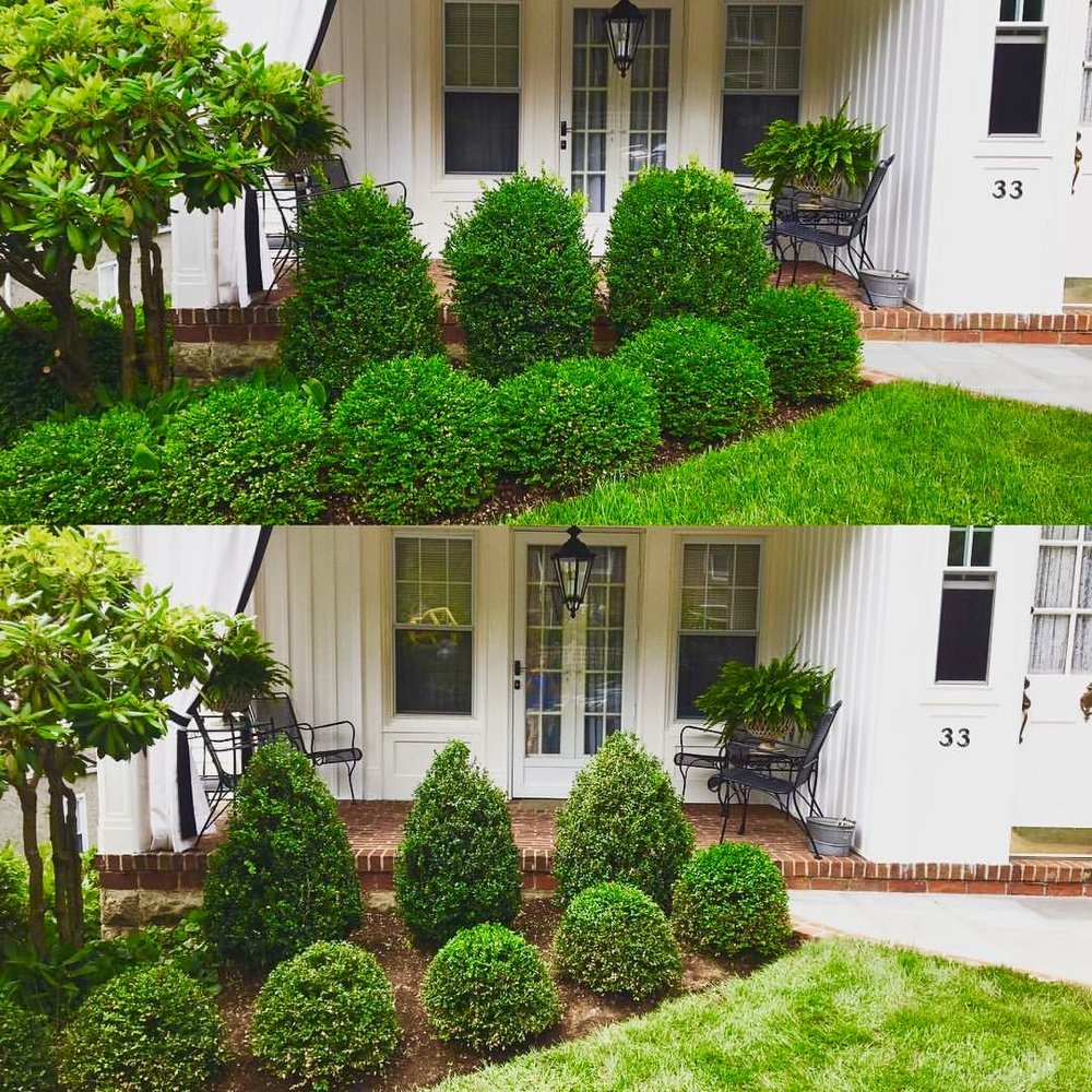 Boxwood Topiary Before and After Pruning Croton-on-Hudson, New York