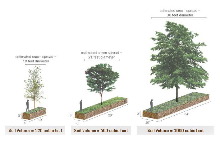 Greater Soil Volume Equals Greater Canopy And Healthier Longer Lived Trees