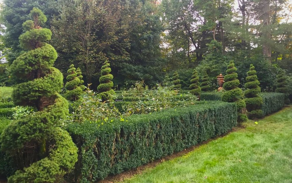 Topiary Spirals and Boxwood Hedge - Expert Pruning And Care, Bedford, NY