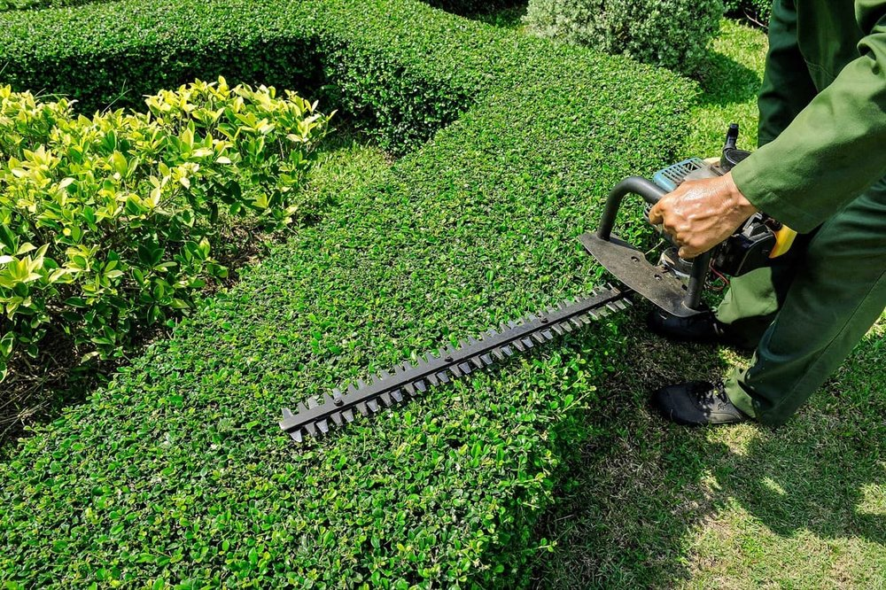 Hedge Trimming With Gas Powered Hedge Trimmer
