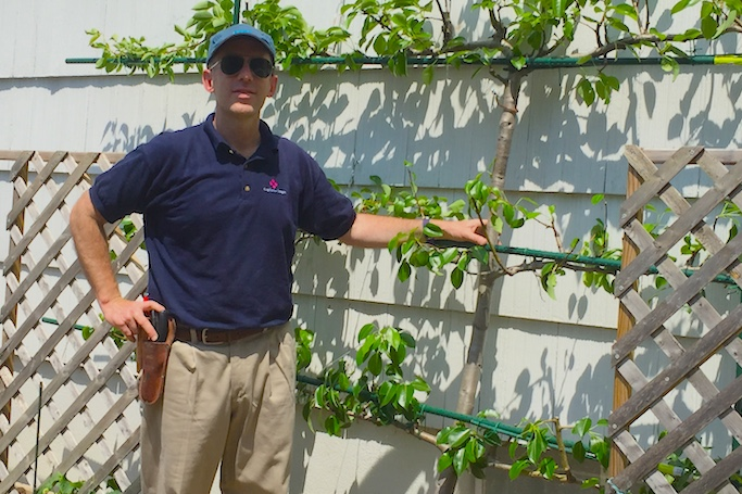Charles With Trained Espalier Pear Tree