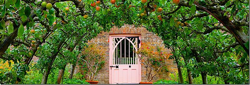 Fruiting Espalier Apple Tunnel