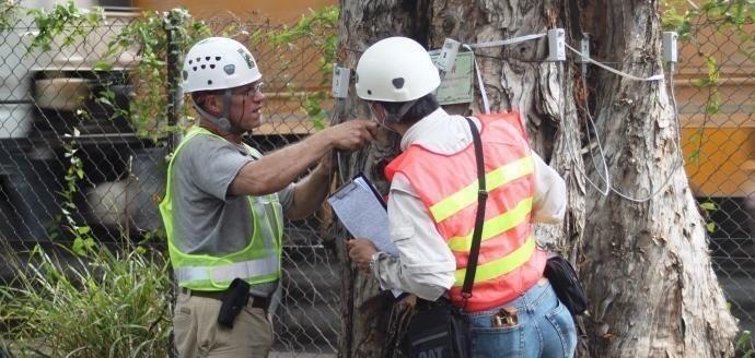 TRAQ_Tree_Risk_Assesment_Arborists.jpg