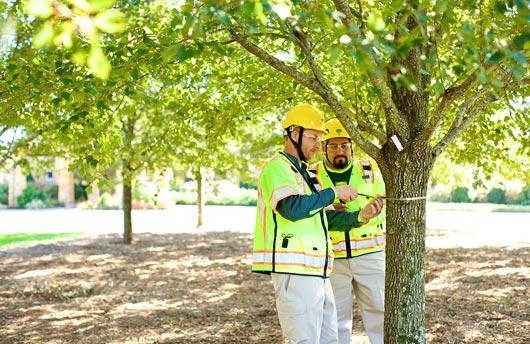 Street_Tree_Inventory_men_grove.jpg