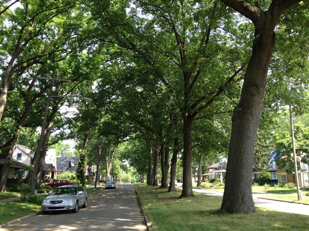 Street_Trees_friendsofgrandrapidsparks.jpg