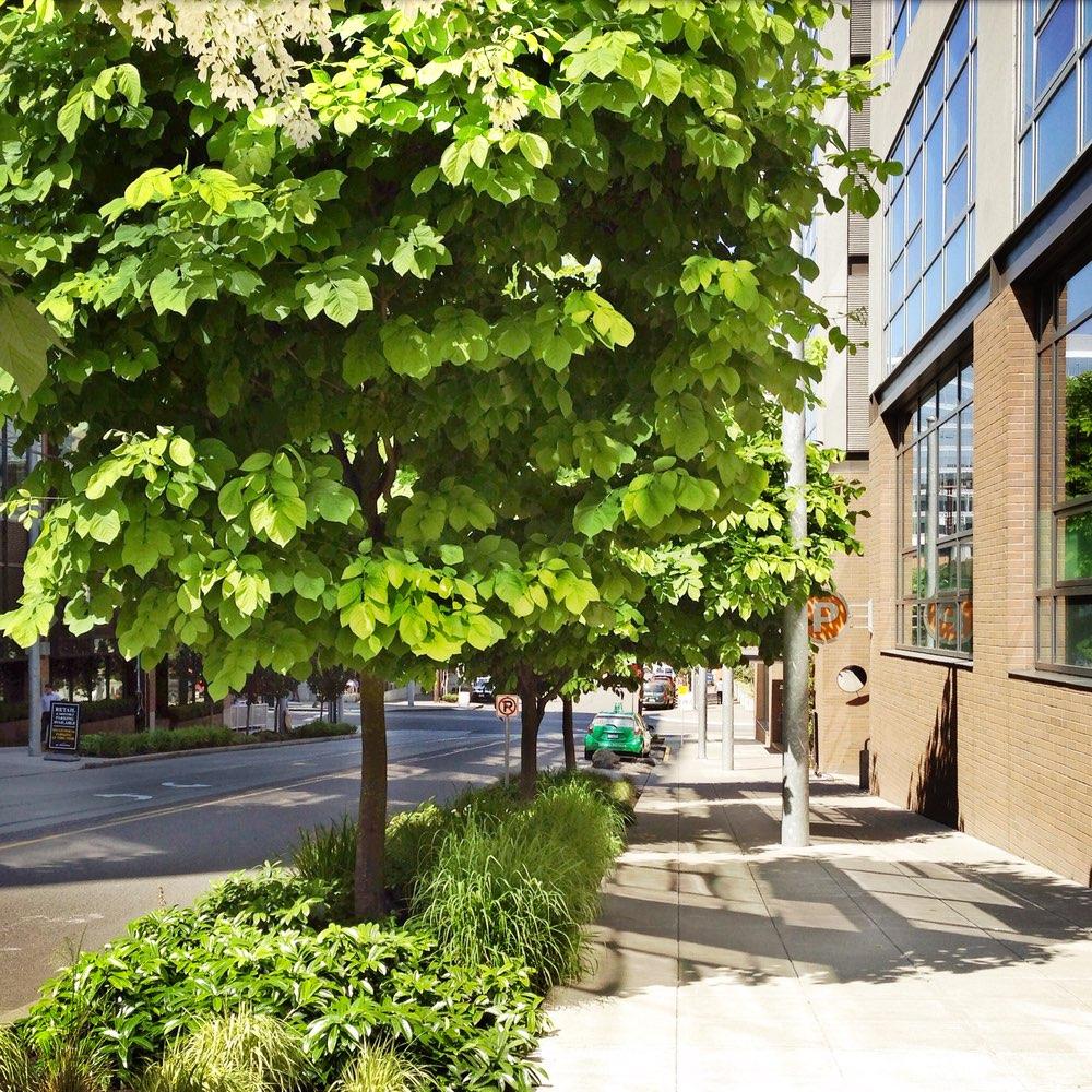 Street-scape_lush_underplantings.jpg