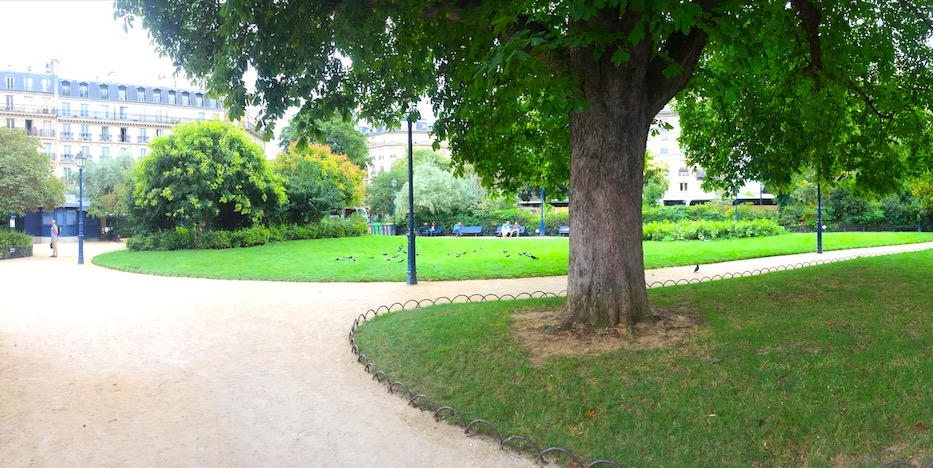 Mature Chestnut Tree In Parisian Park