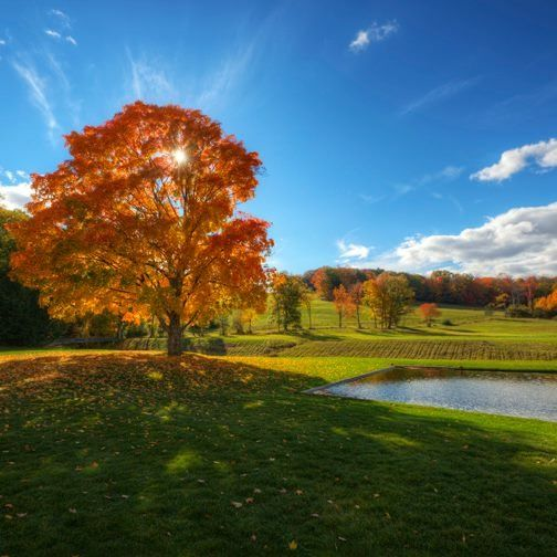 Estate Curation Maple Autumn vistas lawns water sunny.jpg