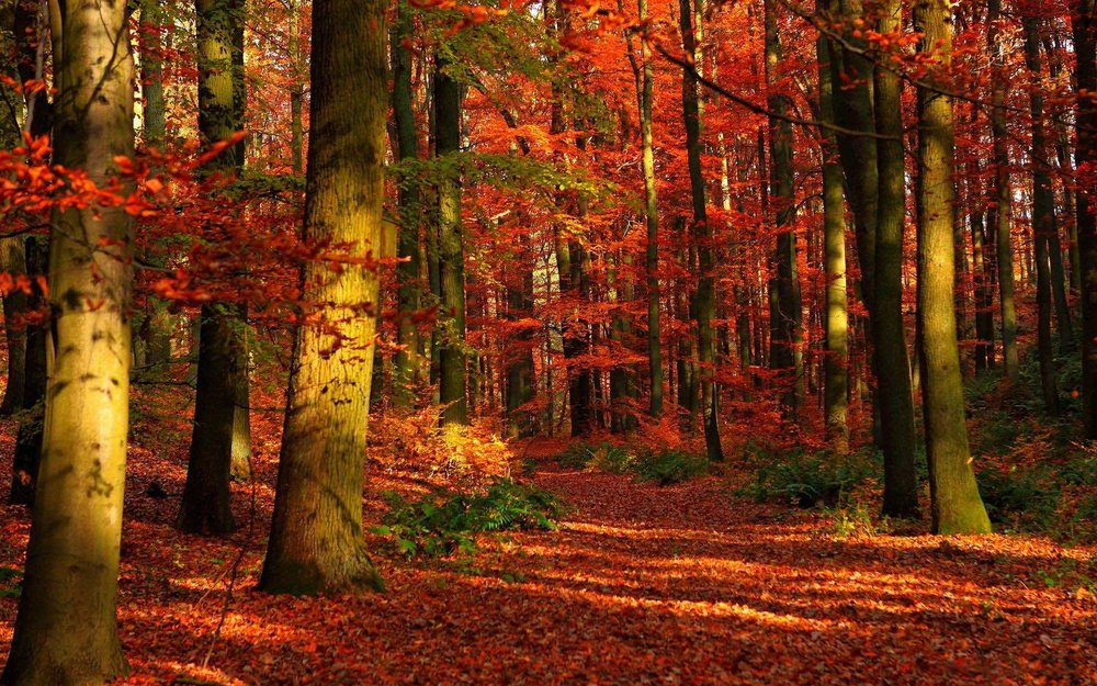 Trees forest autumn leaves on ground.jpg