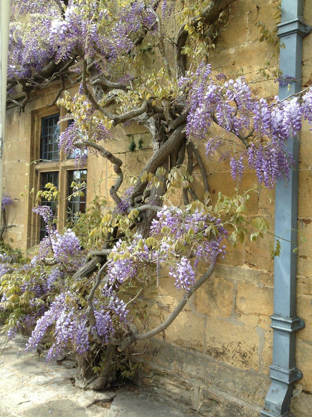 wisteria_broadway_village_life-1181704.jpg