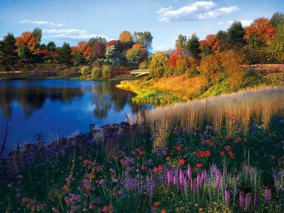 Garden autumn perennials lake trees sky.jpg