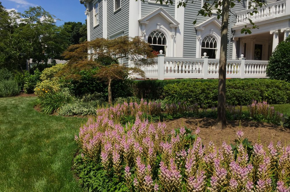 Garden Japanese Maple Weeping Oak Astilbe Pink Summer Colonial Home.JPG