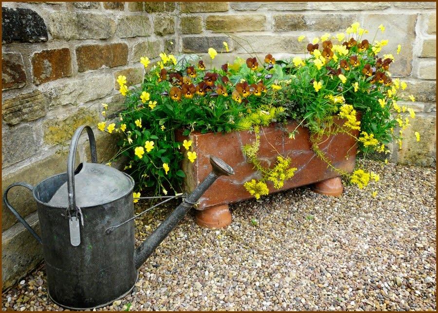 G Pansies & watering can old brick wall.jpg