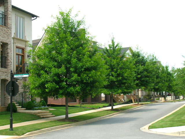 Streetscape and Street Tree Design, Planning, Construction and Care