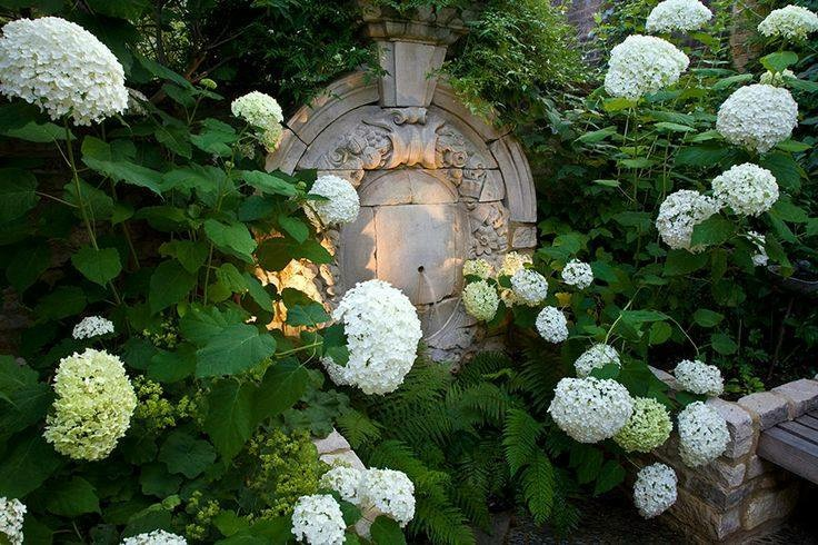 Hydrangea White Fountain Light.JPG