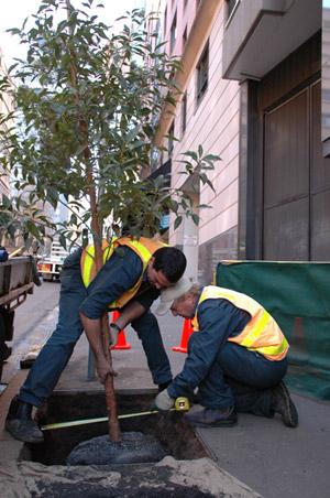 Street-tree-planting_2men.jpg