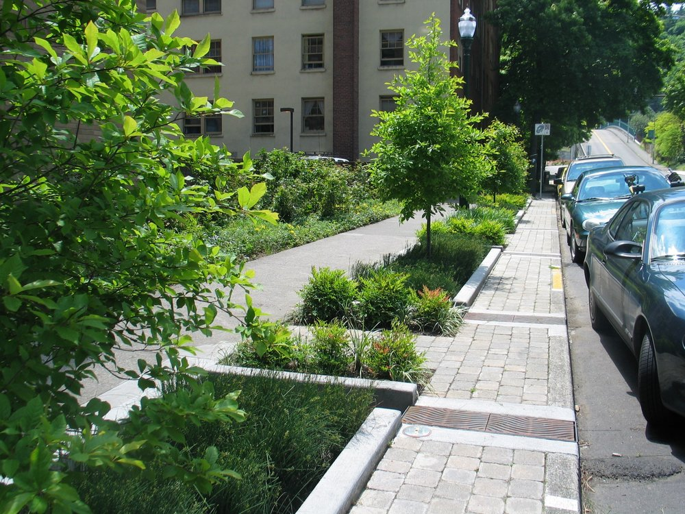 Bio-swale Rain-garden Streetscape