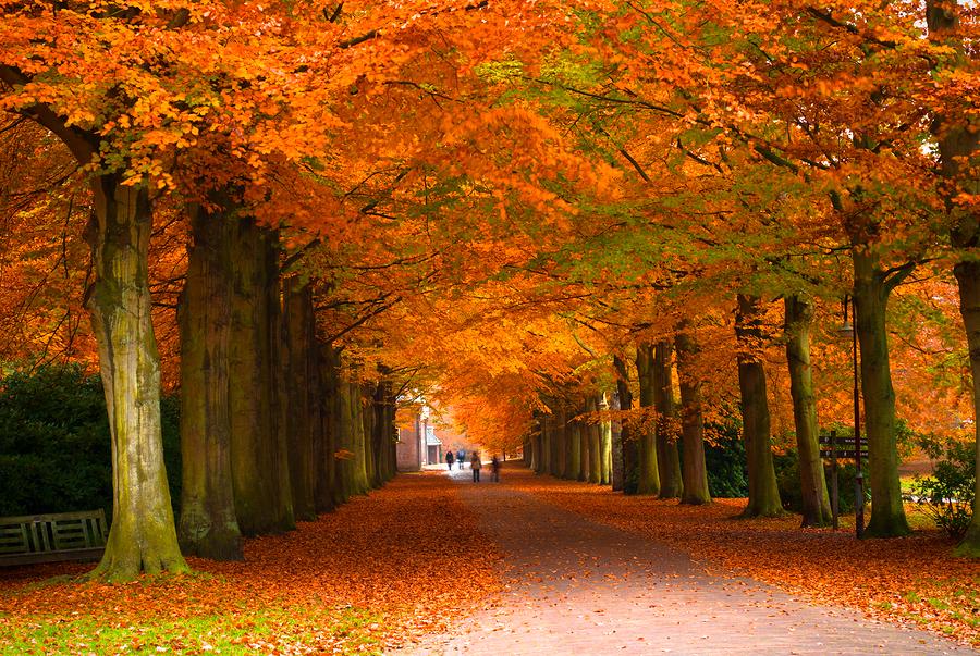 Tree allee beech fall foliage estate.jpg