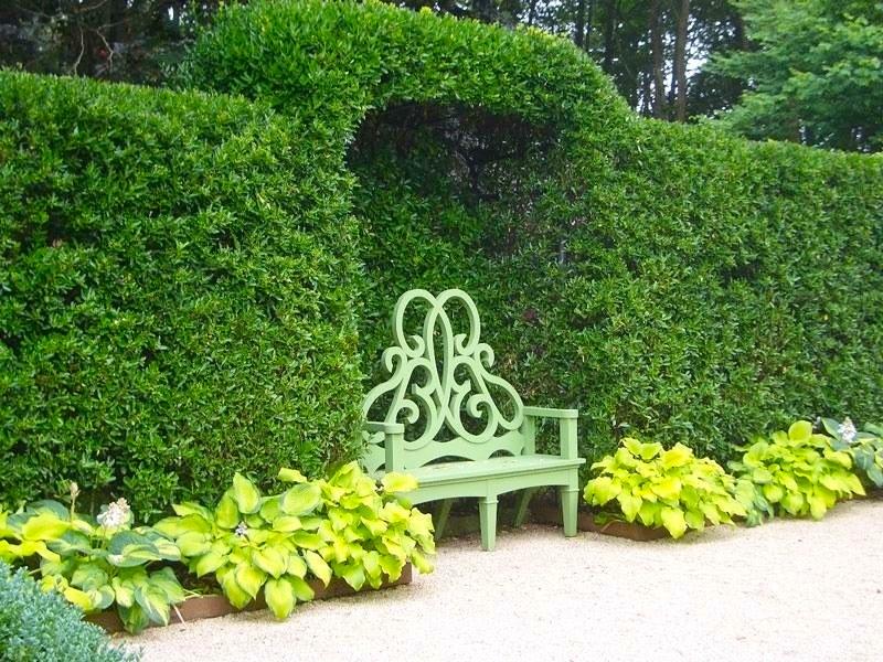 Bench hedge inset hostas.jpg